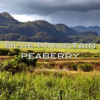 Blue Mountain Peaberry